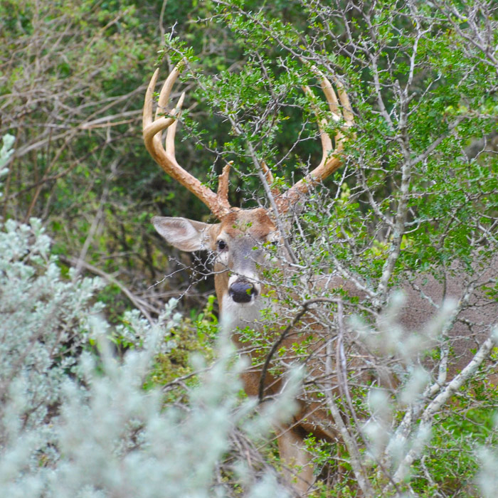 South Texas Whitetail Deer Hunting Lodge Gallery