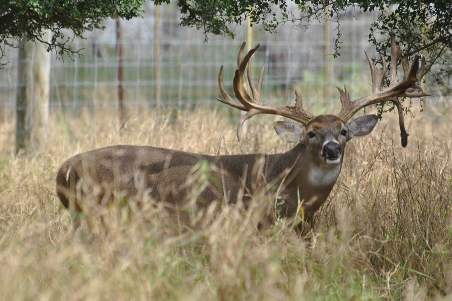 South Texas Whitetail Deer Hunting Reservation